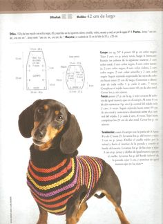 Patterns of woven clothes for dogs - Imagui - Lily - Cunas para Perros Crochet Dog Clothes, Crochet Dog Sweater, Dog Sweater Pattern, Dachshund Clothes, Pet Clothes, Knitting Patterns Free Dog, Dashund, Animal Sweater, Dog Jumpers