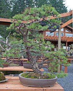 visit to Ryan Neil Bonsai Styles, Bonsai Garden, Tropical Flowers, Indoor Outdoor, Gardening, Magic, Japanese, Plants, Photography