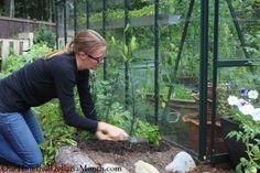 mavis in the garden