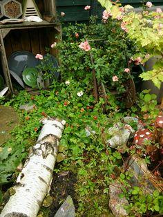 Tuininrichting, wilde tuin