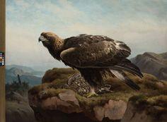 """""""Eagle"""" - """"Kotka jyrkänteen reunalla"""", 1880 – oil on canvas –  Ferdinand von Wright (1822-1906)  - Ateneumin taidemuseo - Malleina Ferdinand käytti aluksi joko täytettyjä tai vasta-ammuttuja vesi- tai metsäkanalintuja. Yksi Ferdinandin suosikkeja oli kyyhkynen, mutta tärkeä sija taiteilija sydämessä oli myöhemmin myös petolinnuilla ja pihapiirin lähes kesyillä pikkulinnuilla."""
