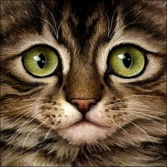 Warrior Cats - Brown Tabby by Wynnyelle on DeviantArt Cats Outside, Image Chat, F2 Savannah Cat, Orange Tabby Cats, Curious Cat, Cats And Kittens, Kitty Cats, Ragdoll Kittens, Funny Kittens