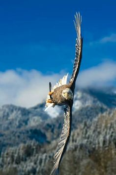 Austrian bald eagle That is some serious crosswind!