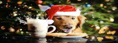 dog Santa Facebook Timeline Cover http://tararadam.com/fbcovers