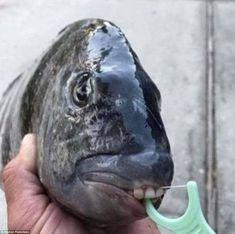 Fisherman reveals terrifying 'alien creatures' of the deep Dental Hygiene, Dental Care, Pacu Fish, Frilled Shark, Ear Candling, Alien Creatures, Strange Creatures, Teeth Care, Healthy Teeth