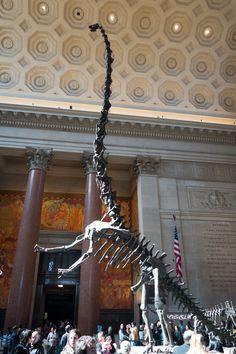 Barosaurus_AMNH_lobby.jpg (3648×5472) - Barosaurus Marsh, 1890. Dinosauria…