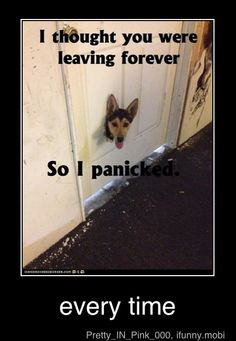 my dog for sure