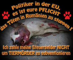 Politiker in der EU Life Is Precious, Stop Crying, Worlds Of Fun, Sad Quotes, Animal Rescue, Veganism, Dogs, Animals, Self