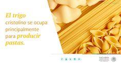 El trigo cristalino se ocupa principalmente para producir pastas. SAGARPA SAGARPAMX