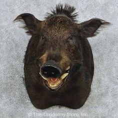 Boar Hog Hunting, Pigs, Cow, Animals, Animales, Animaux, Pork, Cattle, Animal