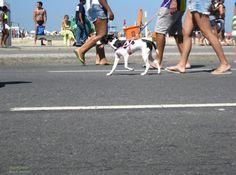 https://flic.kr/p/znrHNV | Domingo | Domingo é dia de passear pela Avenida Atlântica em Copacabana. Rio de Janeiro