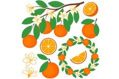 Oranges Set by LoveGraphicDesign on Creative Market