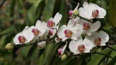biela orchidea - Hledat Googlem