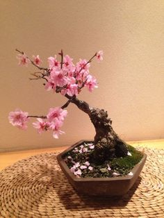 Nearly Natural 4764 Cherry Blossom Bonsai Artificial Tree Pink Features: -Symbolizes the botanical beauty of Japan. -Will offer elegance and tranquility. -Varied pastel colors bring a sense of peace. Flowering Bonsai Tree, Bonsai Plants, Bonsai Garden, Garden Trees, Mini Bonsai, Ficus, Ikebana, Bonsai Mame, Plantas Bonsai