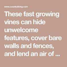 12 Fast Growing Flowering Vines For Your Garden