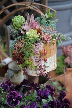 succulent collage tin