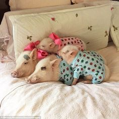 Their owner captures them in all sorts of poses - including sleeping on her bed...