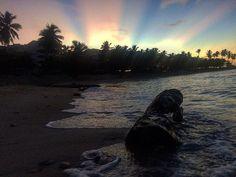 Hemingway sunrise! #bullyingpatubody #mytime #landscape #landscapephotography #hemingway #juandolio #republicadominicana #dominicanrepublic #dr #rd #palms #palm #palmera #tronco #wood #sea #sunrise #sun #lights #photography #photographer #photographers #nature #naturalbeauty #naturephotography #amateurphotography #amaizing #sand Natural Beauty from BEAUT.E