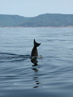 Pilot Whale watching in Cape Breton