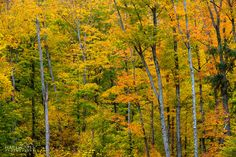 Michigan Back County - Near Marquette, Michigan Marquette Michigan, Upper Peninsula, Country Roads, Autumn, Awesome, Places, Photography, Travel, Outdoor
