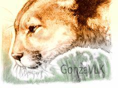 Puma, ilustración de GonzaVLK: https://www.facebook.com/gonza.vlk