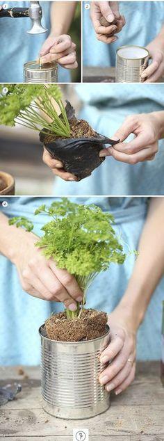 Vamos Receber: Horta em Casa (Foto: arte Karen Hofstetter / divulga)