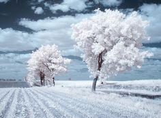 La Beauté majestueuse des Arbres en Pologne capturée par la Photographie infrarouge (11)