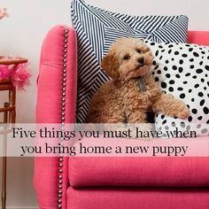 New Puppy Hints and Tips | #pets #puppy #dog