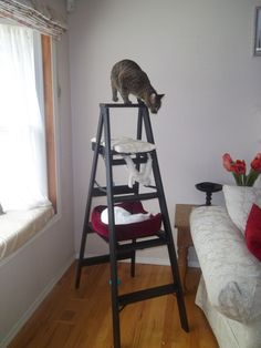 Made this out of an old ladder.  Sanded it down, primed and painted it.  My cats love it!