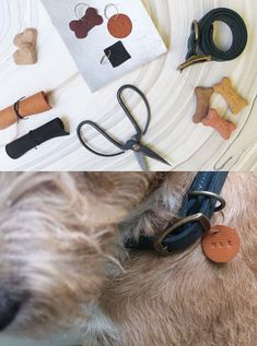 Best DIY Pet Projects to Keep Your Furry Friends Happy DIY Projects & Creative Crafts – How To Make Everything Homemade - DIY Projects & Creative Crafts – How To Make Everything Homemade Animal Projects, Animal Crafts, Diy Name Tags, Pet Odors, Crafts To Make And Sell, Cool Diy Projects, Diy Stuffed Animals, Creative Crafts, Pet Care