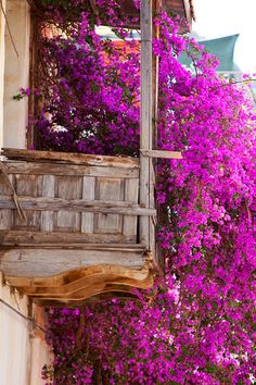 Bougainvillea in Kalkan, Turkey #bougainvillea #Kalkan #Turkey