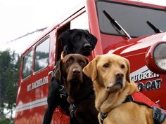 Mt Bachelor Avalanche Rescue Dogs. Ruffwear Ambassadors.