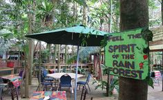 Olley's Coffee In The Rainforest Mt Glorious