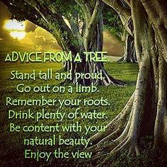 Advice from a tree.  #nature #peace #natureinspired #guide