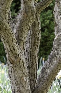 Aging in Place in the Garden: Eight Reasons I Started This Blog