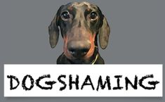 Dogshaming - a hilarious site! You have to look at it if you have a dog! by dorthy