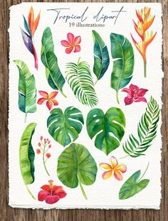 Tropic leaves&flowers Watercolor set by Elena Dorosh on Tropical Flowers, Tropical Leaves, Exotic Flowers, Tropical Plants, Watercolor Images, Watercolor Flowers, Watercolor Wedding, Drawing Flowers, Watercolor Portraits