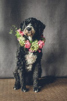 Dog flower collar ⎟ I Heart Weddings and Flower Talk Cute Puppies, Dogs And Puppies, Baby Animals, Cute Animals, Portuguese Water Dog, Dog Wedding, Dog Pictures, I Love Dogs, Animal Photography
