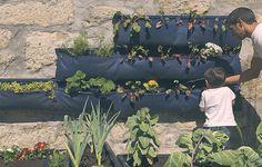 Activa Magazine - Home: A vegetable garden in my school - Noocity Urban Ecology