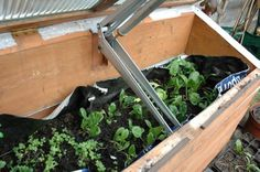 coldframe.jpeg  http://www.permaculture.co.uk/readers-solutions/build-self-opening-cold-frame#