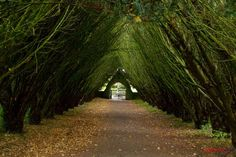 Light at the end of the Tunnel II, Maynooth, Co. Oh The Places You'll Go, Places To Visit, Ireland Pictures, St Brigid, Tree Tunnel, Dead Space, Emerald Isle, Amazing Pics, Great Shots