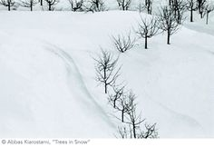 abbas kiarostami~ trees in snow