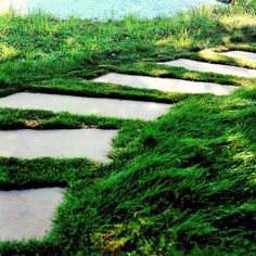 For a natural, informal look in your yard try using a series of stepping-stones that run through the lawn.