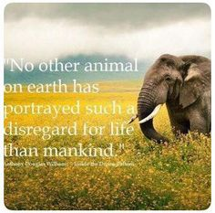 'No other animals on earth has portrayed such a disregard for life than mankind' - Elephant Save Our Earth, Vegan Quotes, A Course In Miracles, Stop Animal Cruelty, Mundo Animal, Animal Quotes, Animal Cruelty Quotes, Look At You, Animal Rights