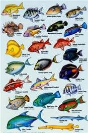 listing names of aquarium fish in alphabetical order