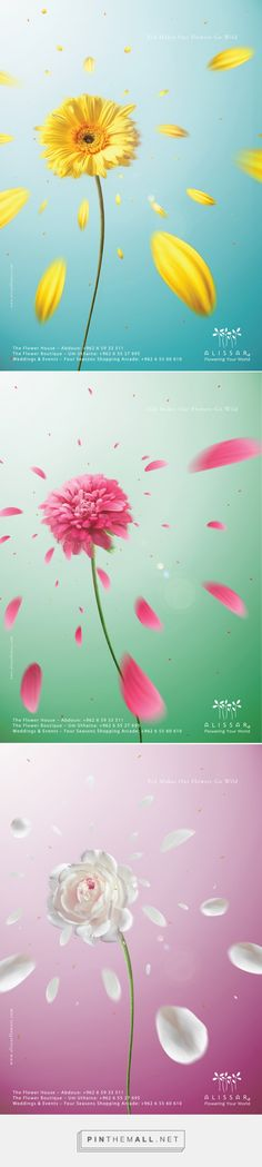 Alissar Flowers - Eid Campaign on Behance