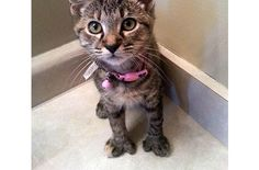 Thumbelina The Cat With Opposable Thumbs