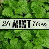 Diy household tips 402790760414974723 - Fluster Buster: Household Tips – 26 Uses for Mint (WWII Series) Source by Growing Mint, Growing Herbs, Organic Gardening, Gardening Tips, Kitchen Gardening, Mint Herb, Do It Yourself Food, Healing Herbs, Medicinal Plants