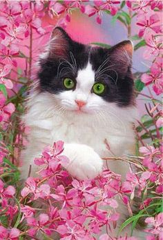I ღ Cats. A kitten is a juvenile cat. After being born, kittens are totally dependent on their mother for survival and they do not normally. Beautiful Kittens, Cute Cats And Kittens, Pretty Cats, I Love Cats, Kittens Cutest, Animals Beautiful, Animals And Pets, Cute Animals, Gato Anime