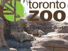 Canada, eh?  The Toronto Zoo is beautiful.  Don't miss it if your heading north.  Couponsforthezoo.com gets you discounted admission to the zoo as well as all the great sites around town.